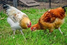"""""""Carni sostenibili"""" non è un ossimoro"""