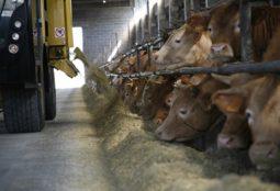 L'importanza della sicurezza dei mangimi secondo la FAO