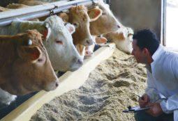 una-risposta-su-benessere-animale-e-antibiotici